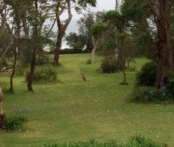 roo in garden