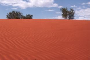 48 red dune